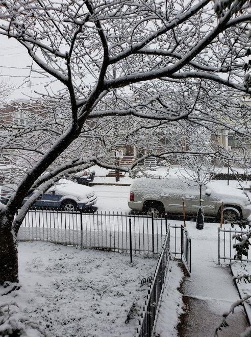 DC Snow Day
